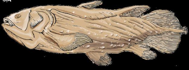 Coelacanthcrop